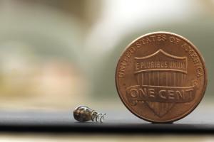 Poon's tiny wireless chip can treat chronic pain using neurostimulation. (Courtesy of Austin Yee)